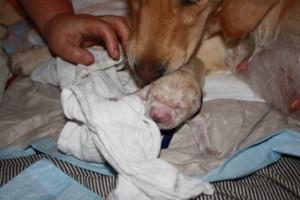 Shirin Geburtsablauf