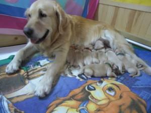 Geburtsablauf
